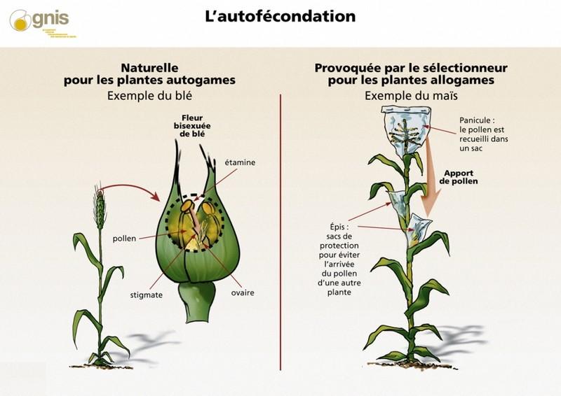 plantes découvertes par christophe colomb
