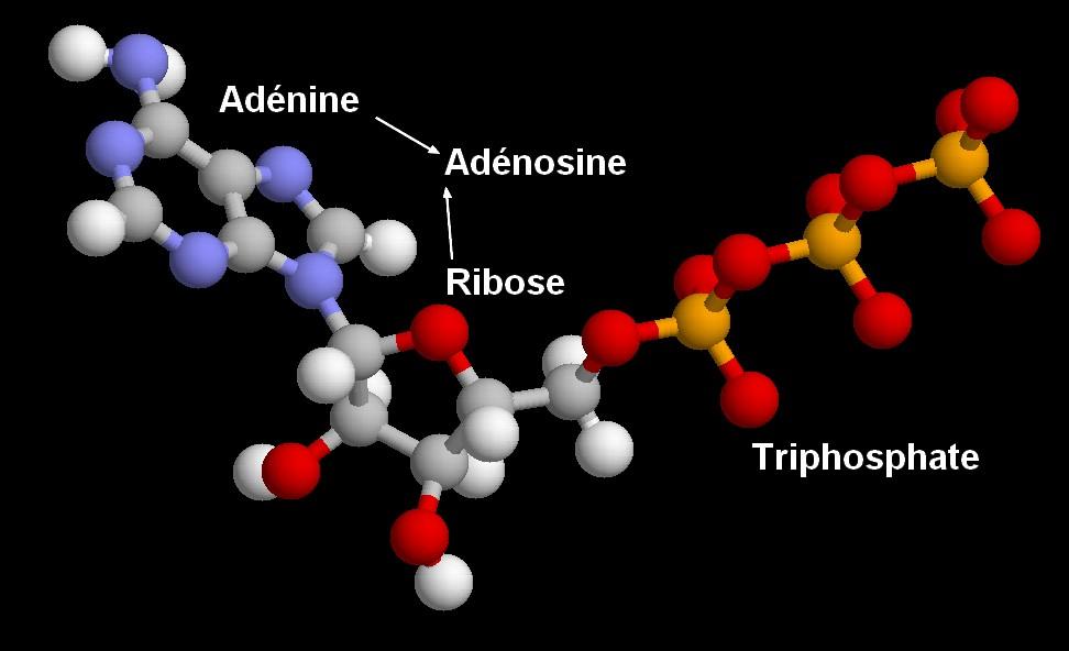 molécules rastop